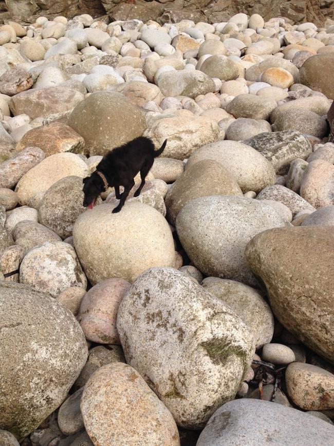 Molly at Cot Valley