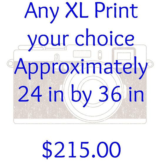 ANY XL PRINT