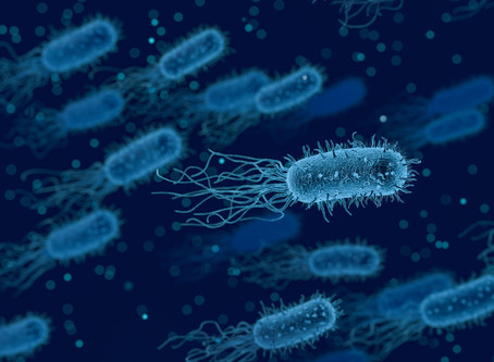 Bacteria find it difficult to evolve antibiotic resistance when in a community