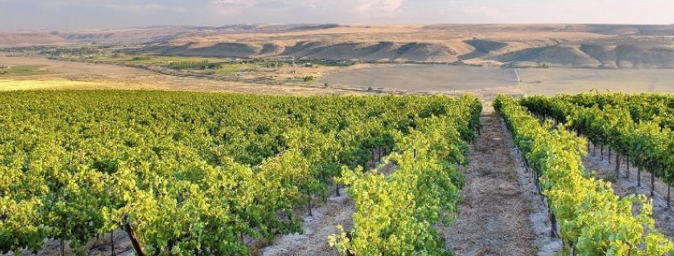 Desert Winery Landscapte.png