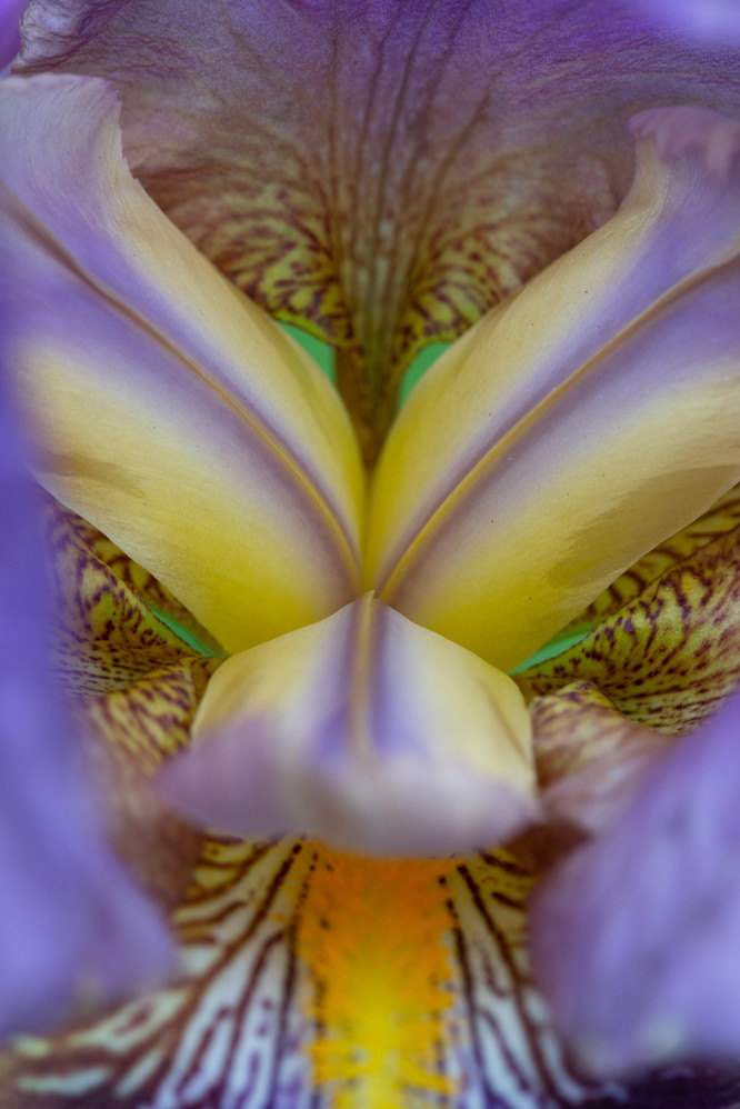 bloem©dorienhein-7437.jpg