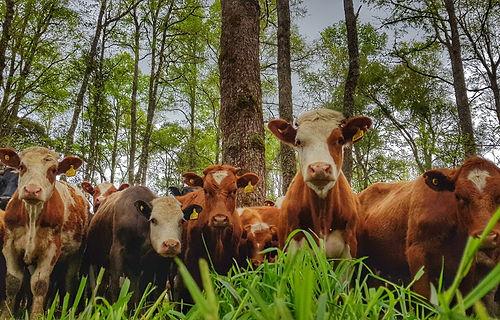 ganadería regenerativa