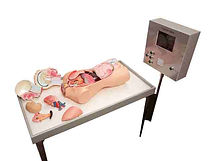 KVD Technologies Life Science Exhibits Theatre Bed