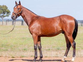 Lot 40 – USED TO ME FRA x LA BISCUIT Colt