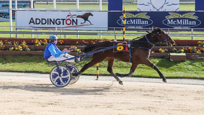 Love You progeny has hit the track full of running in New Zealand