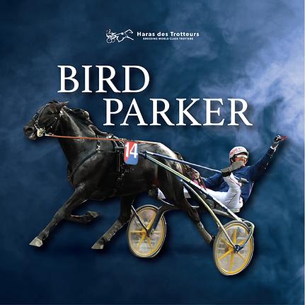 birdparker-16.png