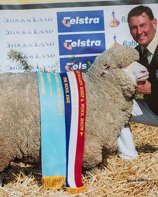 Aus Sheep &WoolShow Bendigo 2003.jpg