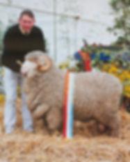 Hamilton Sheep Show 2009.jpg