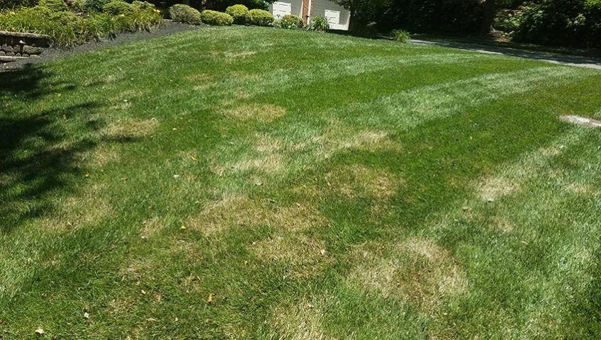 A lawn with brown dry patches of grass