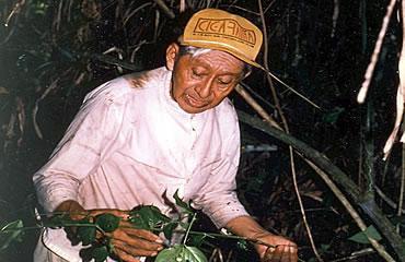 Maya-Shaman-Don-Elijio-Panti-collecting.