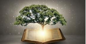 Graceful Perseverance: Gaining Wisdom - 05/03
