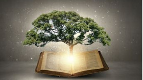 Graceful Perseverance: Gaining Wisdom - 02/10