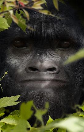 bigfoot-face-37-matt-07-0a.jpg