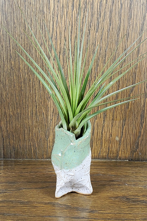 Handmade Ceramic Green and White Pot with Air Plant / Indoor or Outdoor