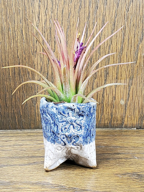 Handmade Ceramic Blue and White Pot with Air Plant / Indoor or Outdoor