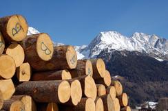 Tone wood