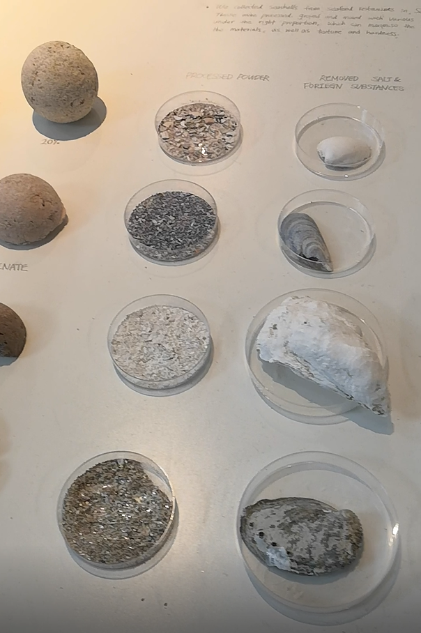 Four different seashells in dishes, next to them four small dishes with material ground from those seashells and next to them material produced mainly using the ground seashells.