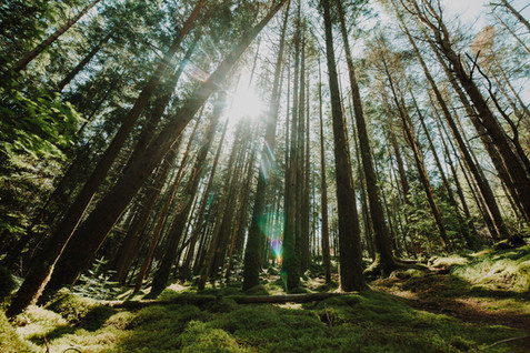 Forestación en Brasil