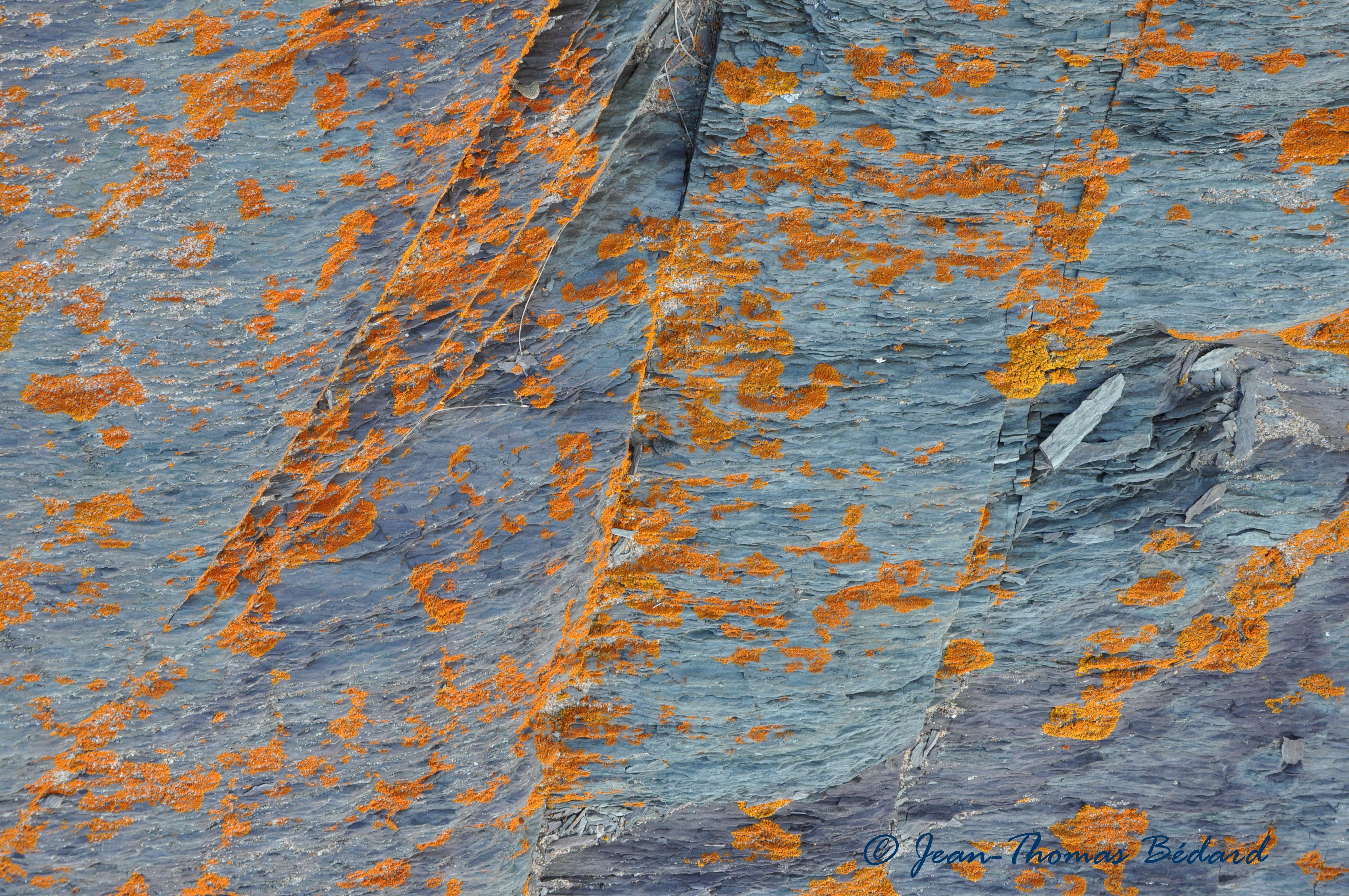 L'oeil du vent - L'Île Verte, 2014