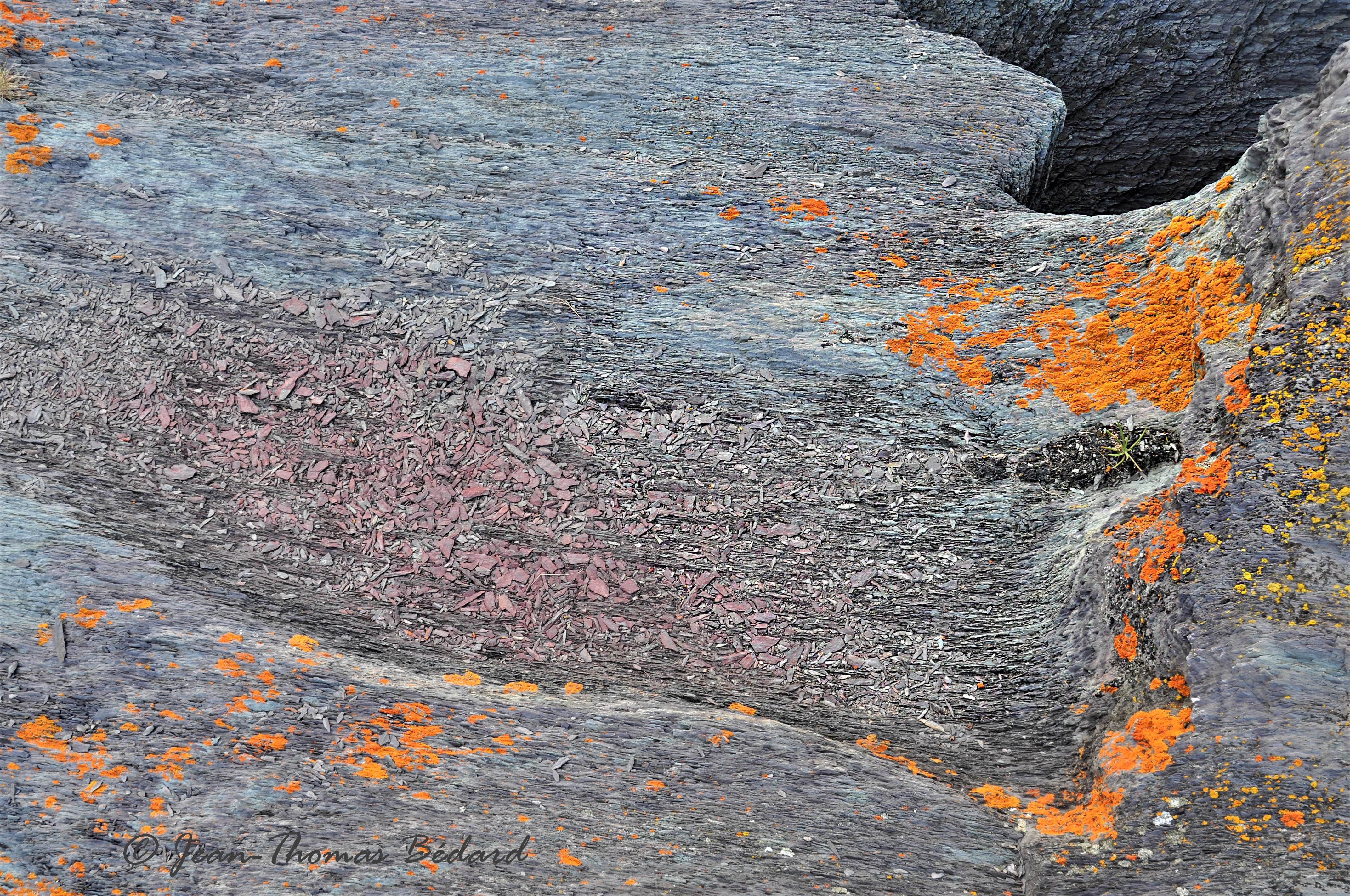 Poussières d'étoile - L'Île Verte 2014