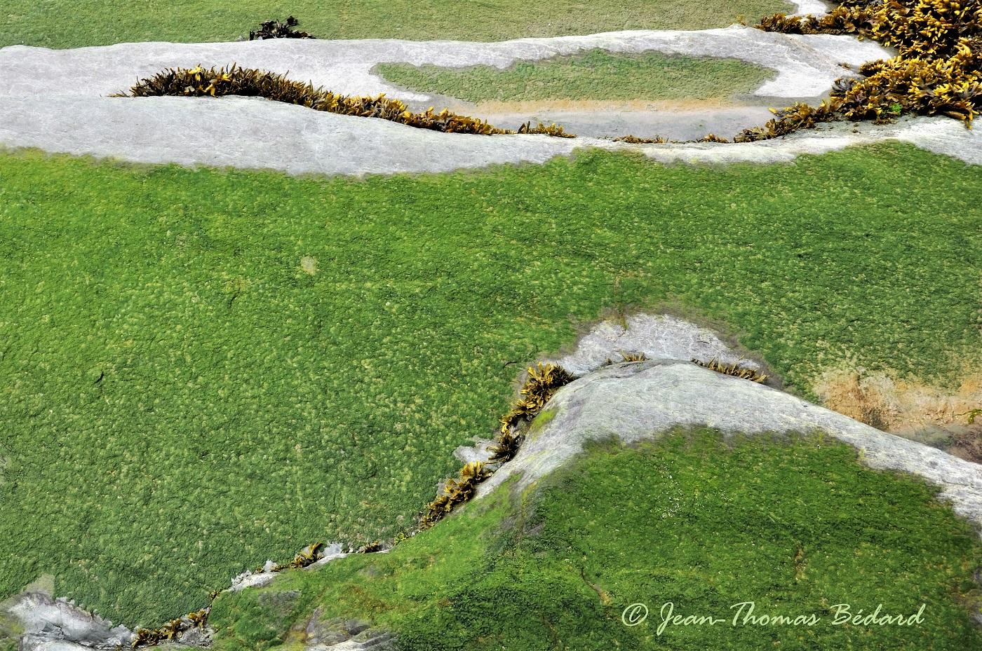 Verte prairie - L'Île-aux-Lièvres 2014