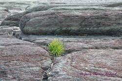 Résilience - L'Île Verte 2014