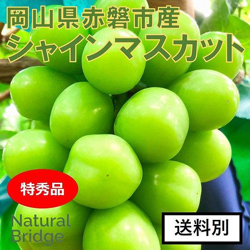 シャインマスカット 特秀品 1房/箱  ( 岡山県赤磐市産 )
