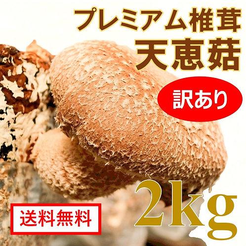プレミアム椎茸 天恵菇【訳あり】2kg <変形、色変色の場合あり等:味は同じ>