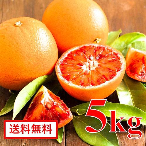 愛媛県産 ブラッドオレンジ【5kg】( タロッコ種 )
