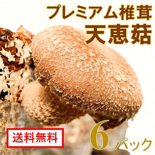 プレミアム椎茸 天恵菇 6パック