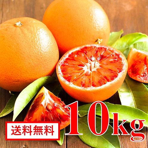 愛媛県産 ブラッドオレンジ【10kg】( タロッコ種 )