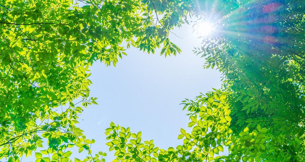 葉と空.jpg