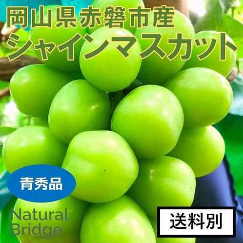 シャインマスカット 青秀品 2kg(3~4房)/箱 ( 岡山県赤磐市産 )