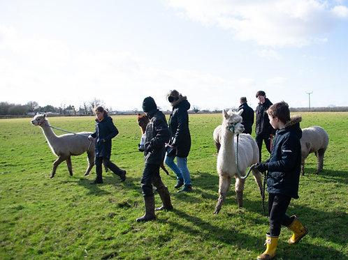 Family of four Alpaca Walk Gift Voucher