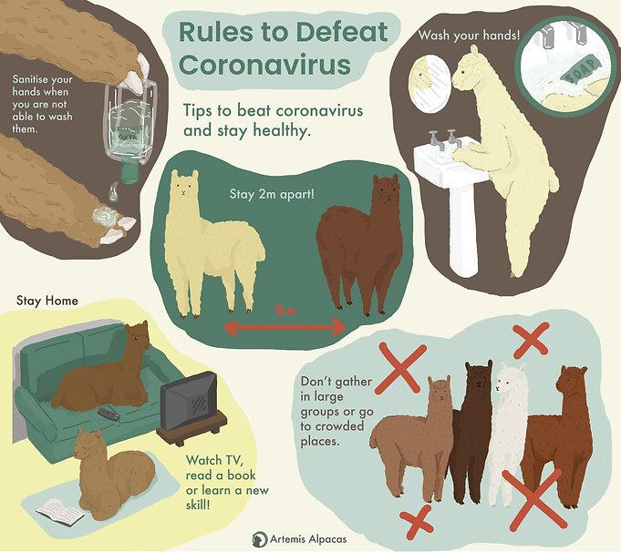 alpaca infographic .jpg