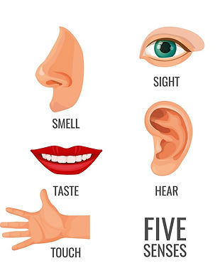 five-senses-with-titles-at-body-parts-ve