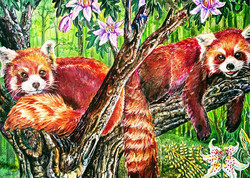 color-me-your-way-coloring-book-coloring-page-red-panda