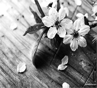 Flower for WBP_edited.jpg