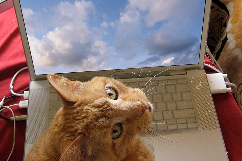 1200px-Computer_Using_Cat_edited.png