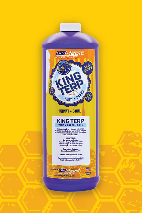 king terp photo.png