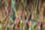 Tropico2016Gayaman032.jpg