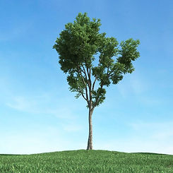 tall-tree-with-long-trunk-3d-model-obj-9