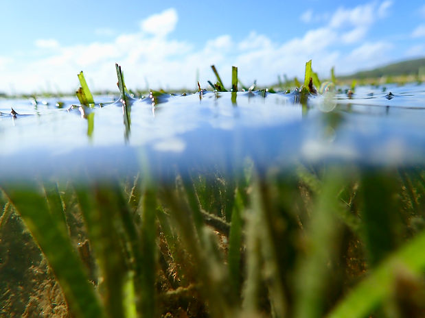 seagrass.jpeg
