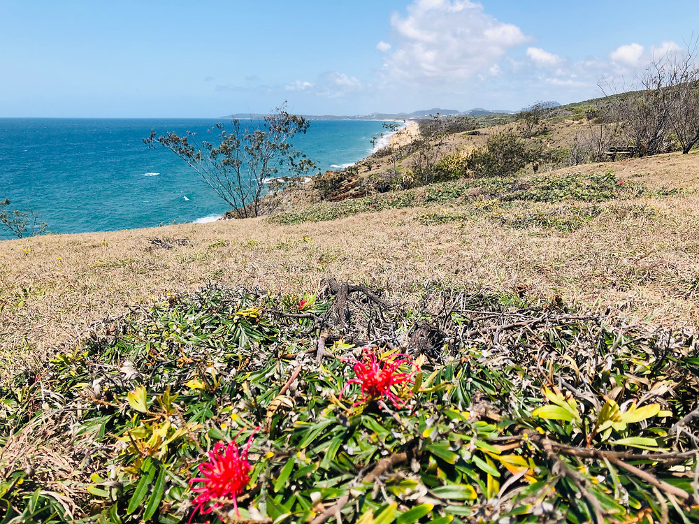 A coastal view from the 1770 headland along the Agnes Water main beach. Native flowers in the foreground, a grassy area, some trees. Ocean to the left