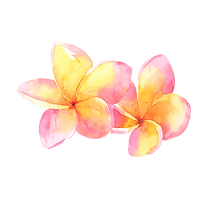 frangipani 2.png