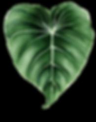 AlohaHawaii_23.png