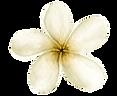 AlohaHawaii_16.png