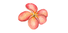 AlohaHawaii_15.png