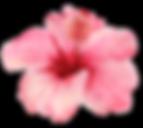 AlohaHawaii_13.png