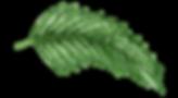 AlohaHawaii_19.png